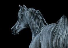 Rysunek konia w negatywie.