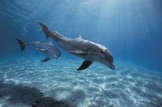The Cove: Sign the Petition to Help Save Japan's Dolphins