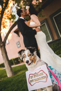 Dog sign Wedding Vegas Retro Australian Shepherd Amberlight Collective