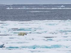 Arctic may become free of Ice for the first time in 100,000 years!