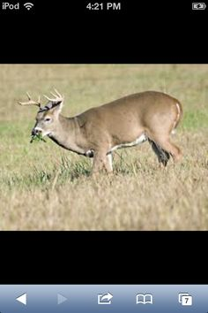 Shot a doe got to get a buck this year hopefully