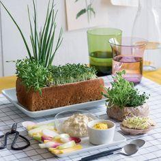 Une jardinière entièrement comestible pour l'apéro !