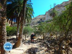 - Zorbas Island apartments in Kokkini Hani, Crete Greece 2020 Crete Greece, The Best, Island, Travel, Europe, School Holidays, Holiday Destinations, Greece, Viajes