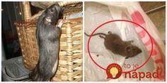 Hneď ako sa ochladilo, začali mi do domu liezť myši: Toto mi poradil švagor a myši sa pratali z pivnice aj z bytu ako namydlený blesk! Animals, Home Decor, Pest Control, Buxus, Nature, Animais, Homemade Home Decor, Animales, Animaux