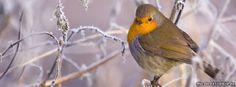Vogel 304 Facebook Titelbilder