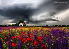 Amazing photos from the Hungarian lowland fascinating colors \ Erstaunliche Fotos aus dem ungarischen Tiefland faszinierende Farben