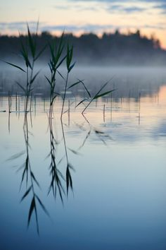 """""""Make your heart like a lake with a calm still surface and great depths of kindness."""" ~ Lao Tzu Photo by: Vilhelm Sjostrom Location: Midsummer in Finland ♥ lis Beautiful World, Beautiful Places, Beautiful Pictures, Landscape Photography, Nature Photography, Morning Photography, All Nature, Belle Photo, Beautiful Landscapes"""