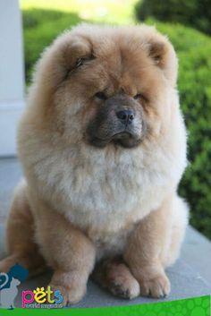 Buenos días ☀️️  #PetsWorldMagazine #RevistaDeMascotas #Panama #Mascotas #MascotasPanama #MascotasPty #PetsMagazine #MascotasAdorables #Perros #PerrosPty #PerrosPanama #Pets #PetsLovers #Dogs #DogLovers #DogOfTheDay #PicOfTheDay #Cute #SuperTiernos