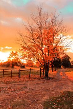 Fall. by Micheal Phan on Capture Arkansas // My front yard.