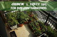 Quick and dirty tips for Balcony gardening #Balcony #Gardening #urbangardening #sustainability #potplants #plants