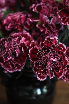 Religious Magic And Spiritual Ability Element One Burgundy Carnations