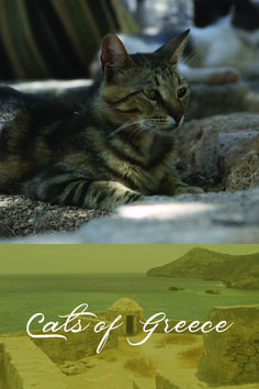 I came across these Grecian cats on a trip some years ago. Journeying to foreign lands has almost always been spurred by my desire to explore a fresh landscape for one of my books. This was no exception. Book Lovers, Cat Lovers, Two Decades, Life Partners, Equal Rights, Almost Always, Growing Up, My Books, Greece