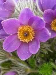 Homeopata & Naturopata   Nutricion Terapeutica: La homeopatía reduce el daño producido por antibió... Plants, Plant, Planting, Planets