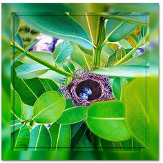 Long-billed white eye nest Nauru Oil painting This painting was created in the early days of my voyage into photorealistic painting in oils on canvas Original Oil Painting, Flora And Fauna, Fine Art, Canvas, Image, Painting, Oil Painting, Art, Pictures