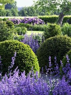 Love the repetition of round boxwoods, spiky (Russian Sage?) purple things.