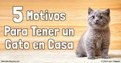 No cometas estos errores cuando adoptes un gato: ignorar las necesidades de tu mascota existente, adoptar por capricho e insistir en un gatito. http://mascotas.mercola.com/sitios/mascotas/archivo/2016/09/20/errores-al-adoptar-un-gato.aspx