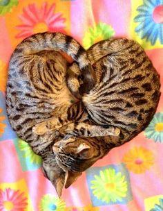 Kitty cat heart