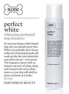 Perfect White: Whitening Perfumed Dog Shampoo by B.one (400ml) | B.one Luxury Dog Shampoos at Urban Pup