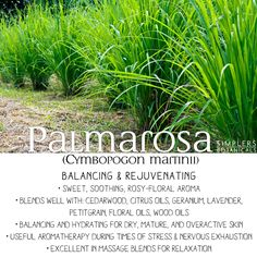 Palmarosa Essential Oil (Cymbopogon martinii)  • Balancing and rejuvenating • Sweet, soothing, rosy-floral aroma • Blends well with: cedarwood, citrus oils, geranium, lavender, petitgrain, floral oils, wood oils • Balancing and hydrating for dry, mature, and overactive skin • Useful aromatherapy during times of stress & nervousness • Excellent in massage blends for relaxation Palmarosa Essential Oil, 100 Pure Essential Oils, Essential Oil Uses, Young Living Essential Oils, Citrus Oil, Young Living Oils, Garden Pictures, Holistic Healing, Geraniums
