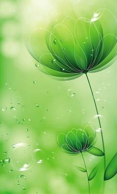 Flower Background Wallpaper, Green Wallpaper, Flower Backgrounds, Nature Wallpaper, Wallpaper Backgrounds, Wallpaper Ideas, Best Iphone Wallpapers, Cute Wallpapers, Qhd Wallpaper