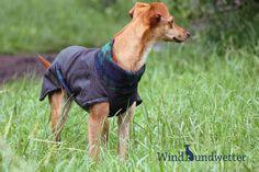 Hund: Bekleidung - Hunde-Regenmantel nach Maß - ein Designerstück von Windhundwetter bei DaWanda
