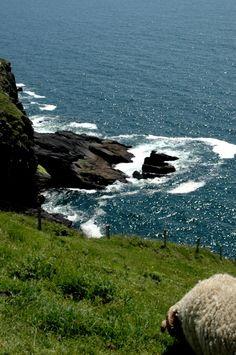 Extreme Grazing, Slea Head, Dingle, Ireland
