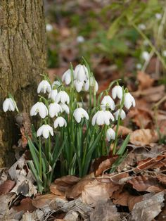 Taken at Walsingham in Norfolk. White Flowers, Beautiful Flowers, Woodland Flowers, Spring Day, Lily Of The Valley, Spring Flowers, Mother Nature, Flower Power, Planting Flowers