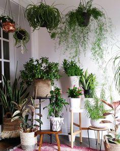 #plantgang #indoorgardening
