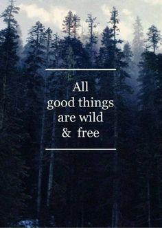 Todas as coisas boas são selvagens e livres.