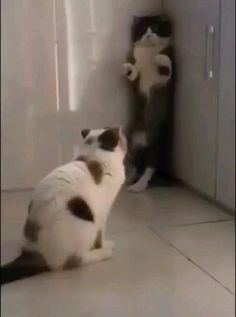 Funny Cute Cats, Funny Cats And Dogs, Cute Cats And Kittens, Cute Funny Animals, Cute Baby Animals, Kittens Cutest, Animals And Pets, Cat And Dog Videos, Funny Cat Videos