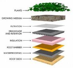 warstwy zielony dach