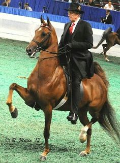 I miss showing horses now. This brings back so many good memories:) Its a lot of work but worth it!