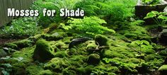 Mosses for Shade