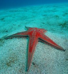 Fascinating article on sea stars (formerly known as starfish).