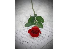"11x14"" Red Rose Love and Sheet Music Fine Art Photography Photo Print $18.99"