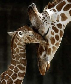 Google Image Result For Http:www.imageblogs.orgwp-contentuploads201109most-fabulous-animals-p...