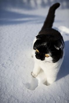 Cats are smarter than dogs.  You cant get 8 cats to pull a sled through the snow. --Jeff Valdez