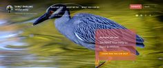 'Ding' Darling Wildlife Society Unveils New Reactive Website. The home page of the new DDWS reactive website. DDWS photo