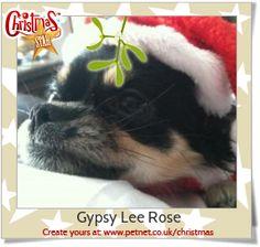 Gypsy Lee Rose - 11 likes