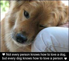 every dog knows.