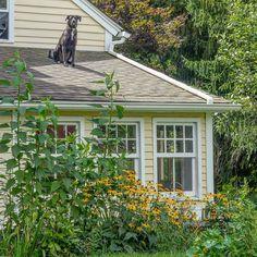Enjoying the dog days of #summer on the farm!    #sillydog #giantsquirrel #blackdog #happydog #organicfarm #farmlife #dog #dogdays #rescuedog #monkeydog #roof #sunbathing #disobedient #escapee