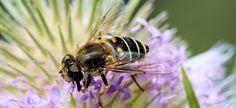 Yummy pollen