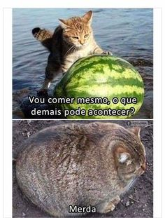 LOLcats is the best place to find and submit funny cat memes and other silly cat materials to share with the world. We find the funny cats that make you LOL so that you don't have to. Funny Animal Jokes, Crazy Funny Memes, Really Funny Memes, Cute Funny Animals, Funny Relatable Memes, Animal Memes, Cute Baby Animals, Funny Cats, Fat Funny
