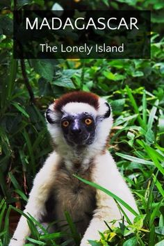 MADAGASCAR - story by Tom Page on Steller