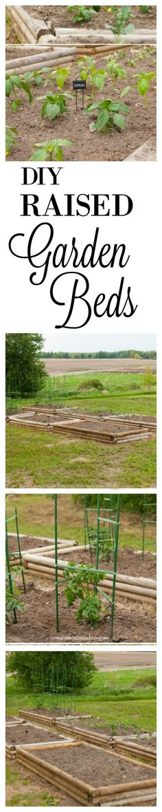 Raised Garden Beds and My Favorite Tomato Cage