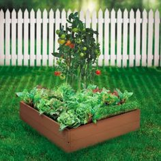So I really like this small raised box idea in the middle of the yard for that stupid stump in the front.  We could build the box, fill it with soil, put a bird bath on the stump and plant butterfly flowers around it.  It would be gorgeous!