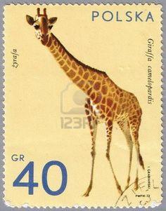 CIRCA 1972: A stamp printed in Poland shows giraffe