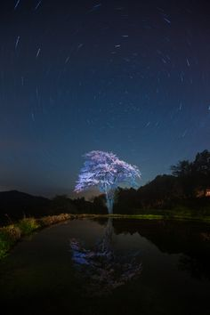 Cherry tree under the moonlight, Toka-machi, Niigata, Japan 十日町 新潟