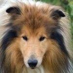 El aceite de salmón para #perros #mascotas #maskokotas #pets #dogs