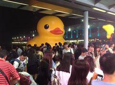 Yellow ruber sensation in #HongKong